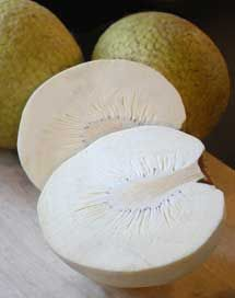Breadfruit  Baked or roasted in a fire, the fruit has a starchy texture and fragrance that is reminiscent of fresh baked bread.