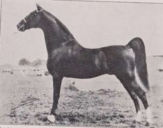 Edna May's King by Bourbon King out of Edna May (BHF)