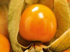 Det läckra physalisbäret smakar lyxigt av ananas. Så här odlar du det vackra bäret och släktingen tomatillo som är huvudingrediens i salsa och många andra sydamerikanska rätter. Garden Seeds, Balcony Garden, Biology, Bulbs, Gardening, Flowers, Sink Tops, Lightbulbs, Bulb Lights