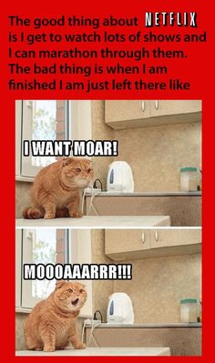 netflix marathon funny cat