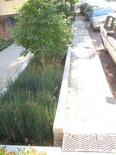 Natural drainage system in Portland. Bioswale style.