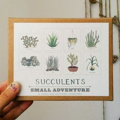 Succulents Card Set by Small Adventure