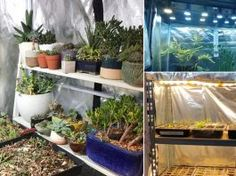 These DIY Grow Tent Ideas are perfect for gardeners who want to grow plants and start seeds indoors without sunlight and outdoor space. Succulent Wall Planter, Diy Planters, Planter Boxes, Growing Herbs Indoors, Growing Plants, Small Potted Plants, Indoor Plants, Air Plants, Wine Barrel Garden