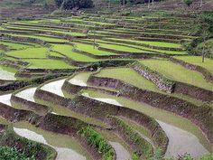 Superbes rizières