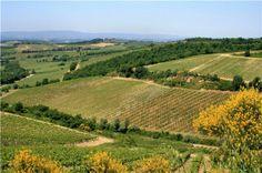 Castellina - Chianti - Tuscany - Italy