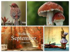 Welkom September.