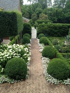 boxwood and white flower hedges.                              …