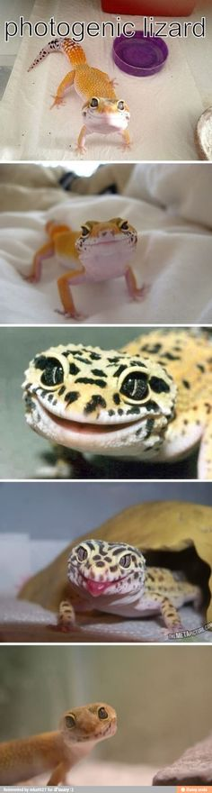 Photogenic lizard looks like he's got a perpetual smile .... I think it's contagious!