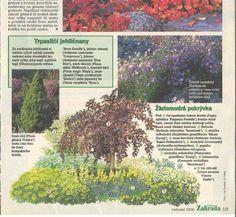 Zahrada - inspirace   Modrastrecha.cz Ale, Garden, Garten, Ale Beer, Lawn And Garden, Gardens, Gardening, Outdoor, Ales