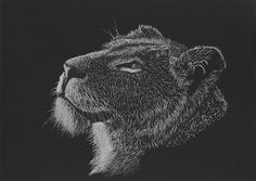 Charcoal Drawing Design Greeting the Morning Sun by artist Tracey Everington of Tracey Lee Art Designs. Pastel and charcoal drawing of a lioness in black and whte. Designs To Draw, Art Designs, Charcoal Art, Charcoal Drawings, Female Lion, Black And White Drawing, Morning Sun, Drawing Artist, Pastel Art