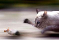 Top 30 des photos d'animaux pris sur le vif ou le timing parfait