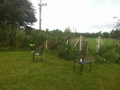 """""""The pear tree in my back garden snapped in half so I have tried to give it another chance with a bamboo cane, some bandage and lots of string!"""""""