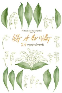 Lily of the valley Watercolour Clipart Hand by WatercolorSeasons