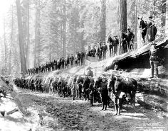 Google Image Result for http://upload.wikimedia.org/wikipedia/commons/8/87/F-Troop-6th-Cavalry-Regeiment-US-1899-Yosemite-NPS.jpg
