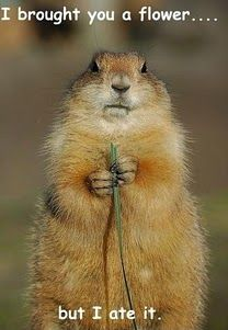 flower for you-funny groundhog