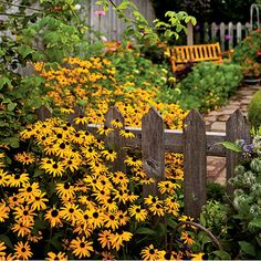 Black-eyed Susans: Unlike walls, most fences aren't solid, so plants don't have to choose one side or the other. Perennials and reseeding annuals can start out on one side, spread by roots or seeds through the pickets, and bloom for you on the other side too. Black-eyed Susans are great for this.