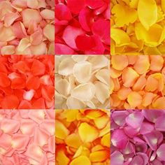 6000 Fresh Rose Petals Assorted Free Shipping ** To view further for this item, visit the image link.