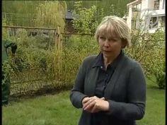 """Создание ограждений - живой изгороди из растений на даче (""""1 Канал"""")"""