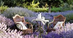 We love this lavender packed garden! What new plants are you planning to add to your garden in Check out this list of some of our butterfly garden favorites! Terrasse Design, Butterfly Plants, Butterflies, Cottage Garden Design, Cottage Gardens, Design Jardin, Starting A Garden, Lavender Fields, Outdoor Furniture Sets