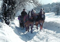 Pferdeschlittenfahrt in Walchsee in Tirol Horses, Animals, Snowshoe, Ski Resorts, Ski Trips, Winter Vacations, Winter Landscape, Animaux, Horse