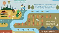 How to feed the world without destroying it [Infographic] #greenpoppies