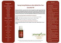 Melalueca alternifolia Tea Tree