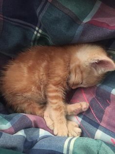 I rescued him from an outside life after his sister got caught by a neighborhood dog and the mom ditched. Meet tj. by princesskayden cats kitten catsonweb cute adorable funny sleepy animals nature kitty cutie ca