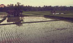 INDONESIA by Thomas Ciszewski, via Behance