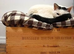 wooden crate pet bed - great way to incorporate this into the house without it looking like a typical cat bed!