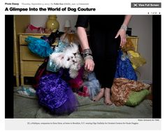 "TIME Magazine - ""ZZ, a Maltipoo, companion to Ilene Zeins, at home in Brooklyn, N.Y. wearing Olga Yuditsky for Orostani Couture for Haute Doggies.""  Read more: A Glimpse Into the World of Dog Couture - LightBox http://lightbox.time.com/2013/09/05/a-glimpse-into-the-world-of-dog-couture/#ixzz3TYPJZRDw"