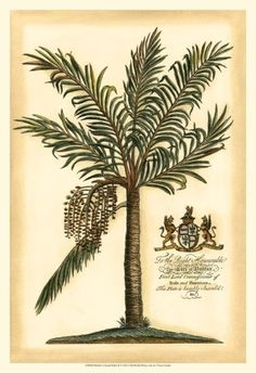 British Colonial Palm II Art Print for