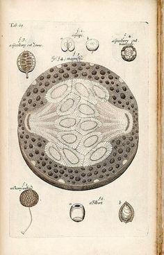 anatomy of plants.