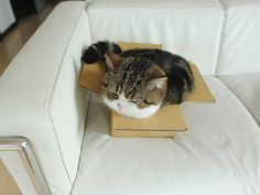 Wow, the box is packed full with Maru!