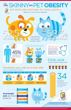 Veterinary Pet Insurance, Pet Health Insurance Plans for your Dog or Cat