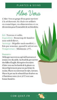 Je vous parle de l'#aloevera , cette #plante magique aux multiples #bienfaits , notamment en #cosmetique #depolluante #alimentation . Parfaite pour les #professionnels du #vegetal et les #artisans de la #nature ! #plant #aloe