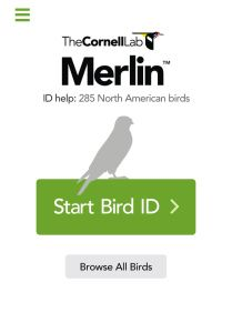 "Merlin, the Cornell Lab of Ornithology's new bird identification application, is a seamless, quick way for beginners to identify birds on-the-go.  What is there to lose? Merlin is absolutely free—""The Cornell Lab of Ornithology's goal is to help you and millions of others to learn about birds."""