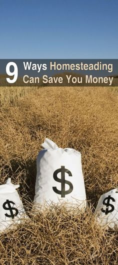 9 Ways Homesteading Can Save You Money. Homesteading affords so many opportunities to cut back on your bills and truly enjoy life. Here are 9 reasons homesteaders spend less. #Homesteadsurvivalsite #Homesteadingcansaveyoumoney #Savemoneymakemoney #Livingoffthegrid