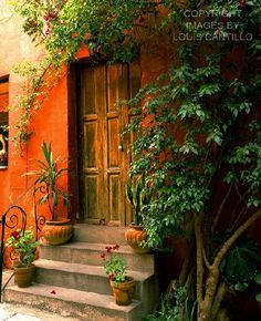 Scarlet Fever  San Miguel De Allende, Mexico http://www.workofartists.com/images/pages/cantillo_dwi_01.htm
