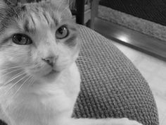 Pretty Kitty Pretty Kitty, Pretty Cats, Submissive, Animals, Beautiful Cats, Animales, Animaux, Animal, Animais