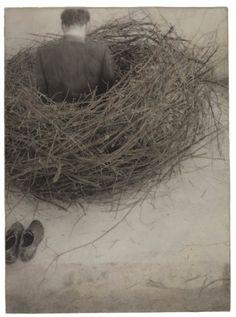 ... los nidos de Juliana y las ganas de entrar en ellos.  Surrealismo  Robert  Shana Parke Harrison    Study of Nest (1994)