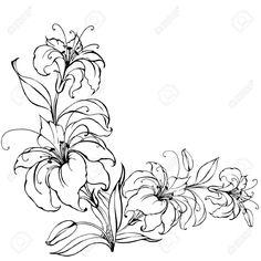 Adonis Flower Drawing Adonis Flower Drawing Images