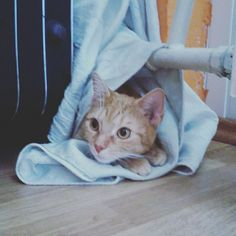 #cat #mycat #Giselle