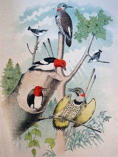 50% off all Bird Lithographs through the end of June! With a minimum $10.00 purchase you may receive 50% off all of my gorgeous birds from a late 1800's Birds of North America Book. Simply enter the code PRINTS to receive this discount. 50% off sale applies to lithographs only. No other merchandise for sale at this time.