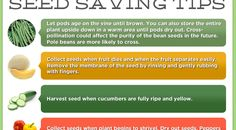 Seed Saving Tips from Grow REAL Food - Organic, Non-GMO Food in Your Backyard. Saving your own seed is a great way to save money, and protect biodiversity in your garden!
