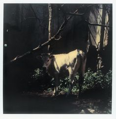 Polaroid by Andrei Tarkovsky Lot 10 - Polaroid 4 Polaroid Photos, Polaroid Film, Appropriation Art, Michelangelo Antonioni, Anthony Van Dyck, Waves After Waves, Photo P, Film Inspiration, Video Film