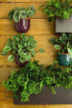 Vasos pregados diretamente na parede parecem flutuar entre as plantas