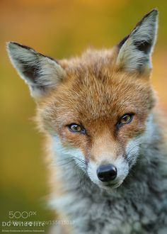 Portrait :) by Giedriius #animals #animal #pet #pets #animales #animallovers #photooftheday #amazing #picoftheday