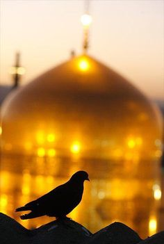 Shrine of Imam Reza in Mashhad Karbala Iraq, Imam Hussain Karbala, Baghdad, Best Islamic Images, Islamic Pictures, Karbala Pictures, Imam Reza, Imam Ali, Imam Hussain Wallpapers