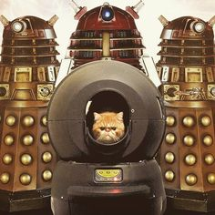 Did you know our friend Oliver of  @teagues_n_oliver is Dalek Prime?  @teagues_n_oliver @teagues_n_oliver @teagues_n_oliver  #litterrobot #exoticshorthair #cat #cute #flatface #kitten #meow #pet #mreggs #catlover #exoticsofinstagram #smushface #weeklyfluff
