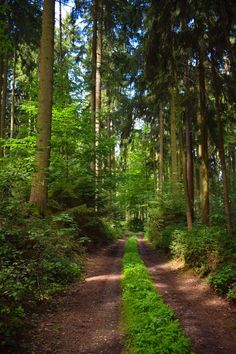 Forest path (no location given) by Matthias Heder